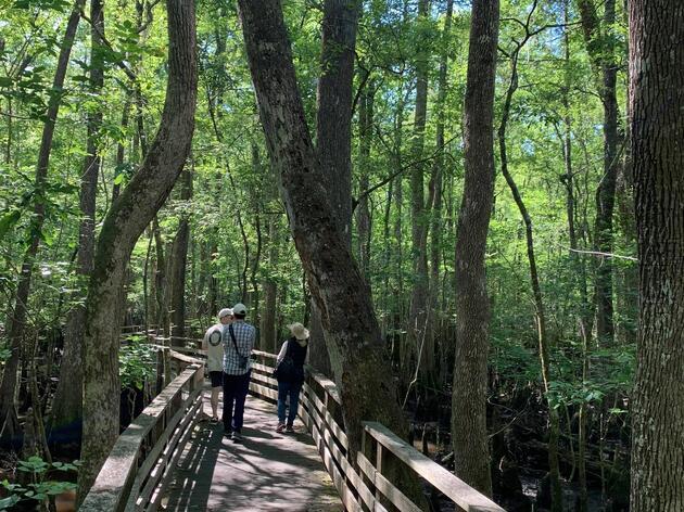 Beidler hosted Representative Sylleste Davis for a tour through the swamp!